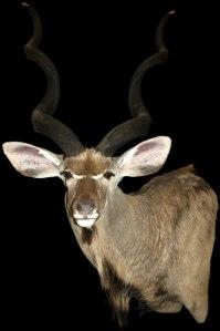 Kudu Should Mount