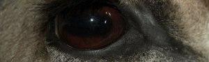 geers-taxidermy_detail-of-eye-work