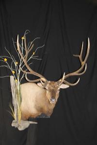 #1 SCI Crossbow Elk 2012